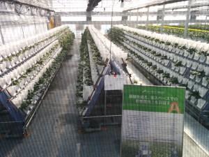 イチゴ生産をIT化。GRAに行ってきました!