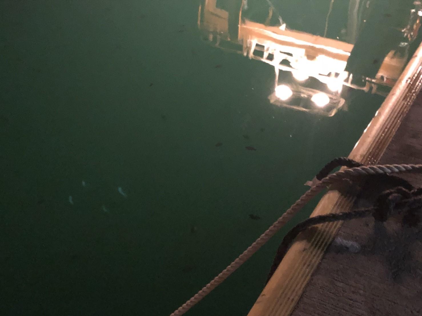 女川の夜のたのしみ方!「夜釣り」を体験