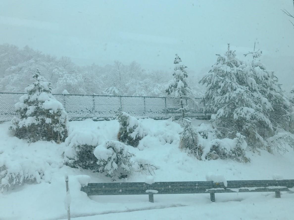 雪だ・・・byマツシタ