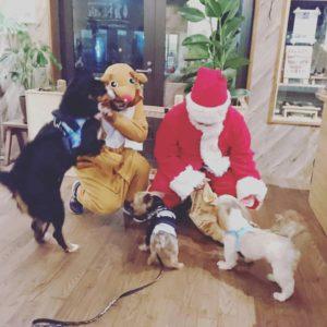 Woodwork Studio Noahさんでのインターン&女川のクリスマス
