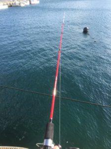 女川生活ー釣り編ー